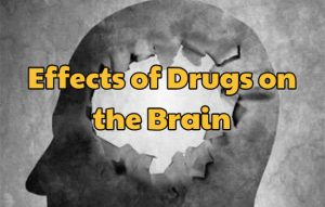 Effects of Drugs on the Brain
