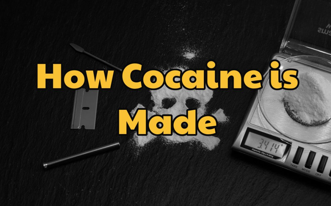 How Cocaine is Made | Okeechobee