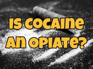 Is Cocaine an Opiate