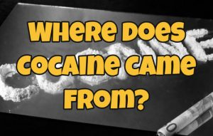 Where does Cocaine came from-